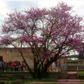 Foro Romano – Istituto Visconti